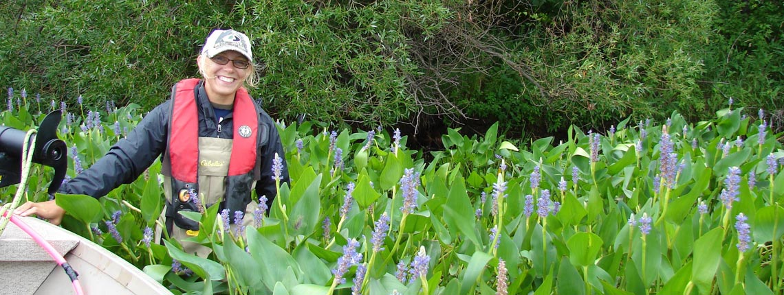 Pickrelweed
