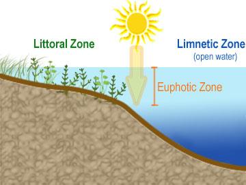 Euphotic_zone