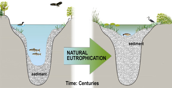 NaturalEutrophication
