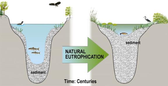 NaturalEutrophication