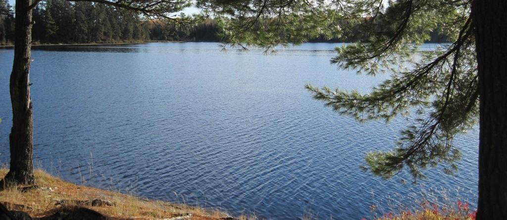 pines framing lake